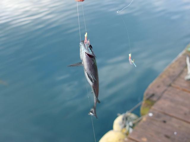 海 施設 大黒 釣り